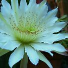 Night Bloomer II by lilybellspics