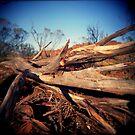 deadwood by Leanne Smith