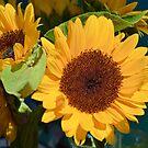 Sunflower Bunch by Lynda Anne Williams