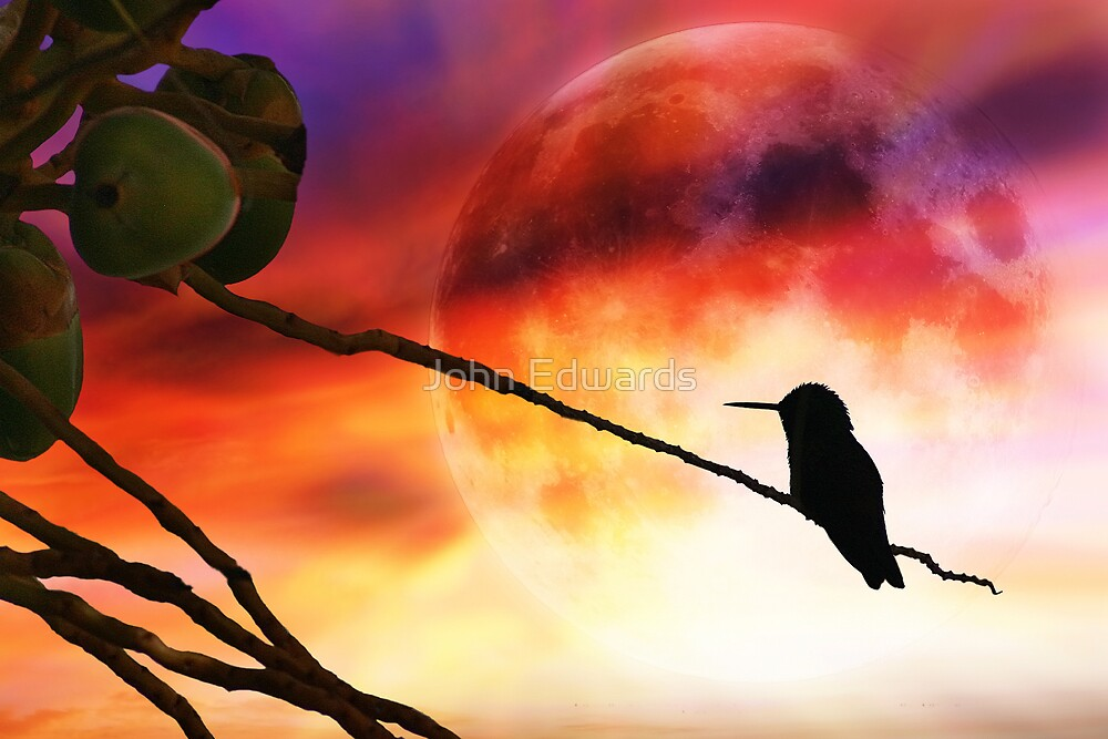 Phantom Moon by John Edwards