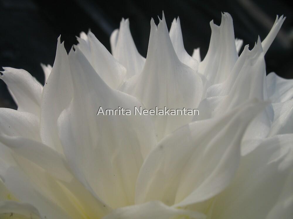 Blades by Amrita Neelakantan