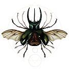 Vitruvian Beetle by Lou Patrick Mackay