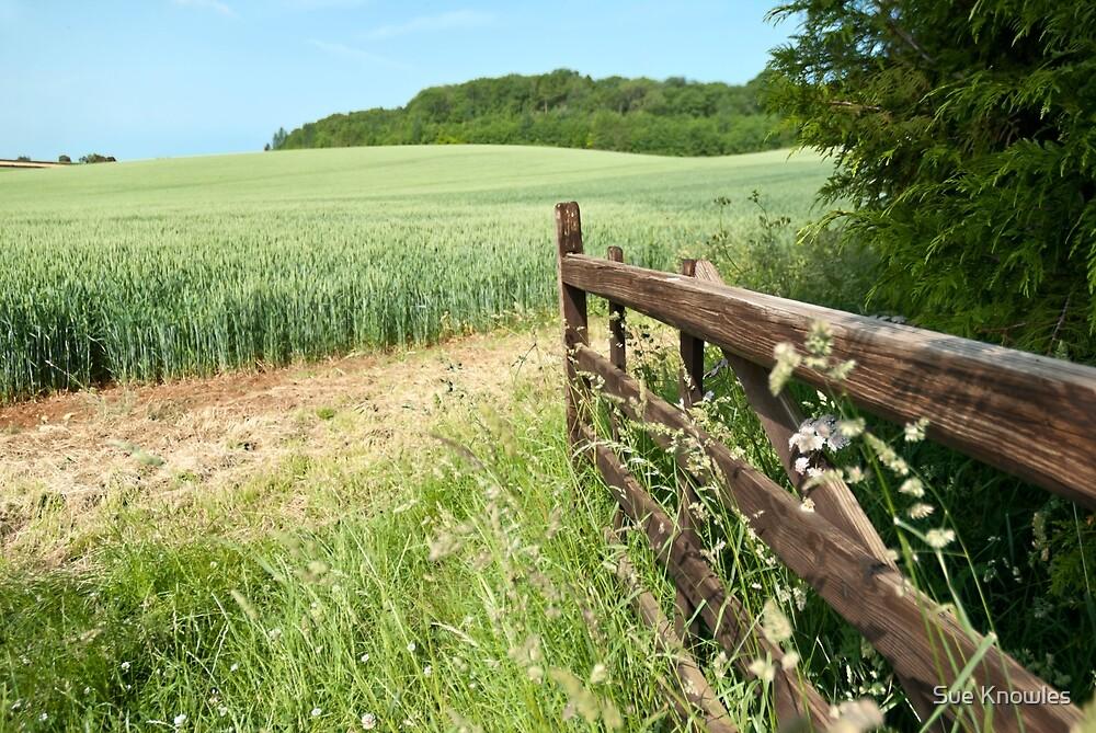 Through the farmer's gate by Sue Knowles