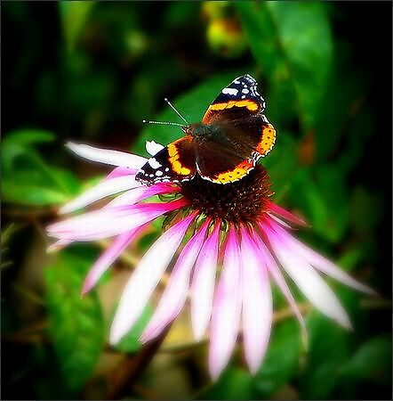 Butterfly  by Dragonflyphoto