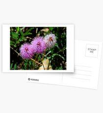 Sensitive Brier Postcards