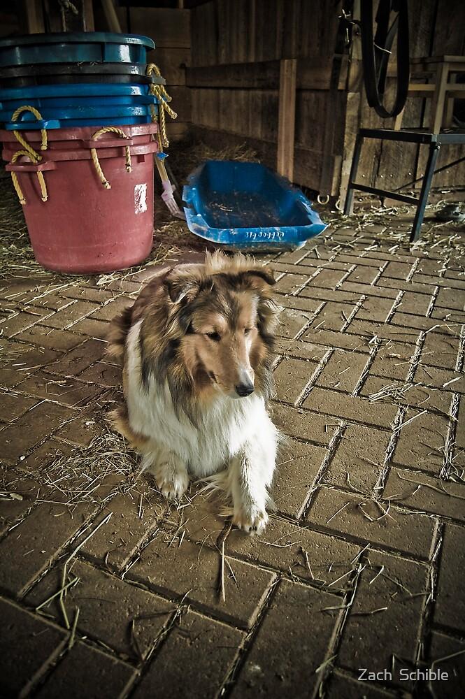 Lassie by Zach  Schible