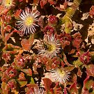 Australian Wild Flowers #14 by Paul Gilbert