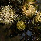 Australian Wild Flowers #16 by Paul Gilbert