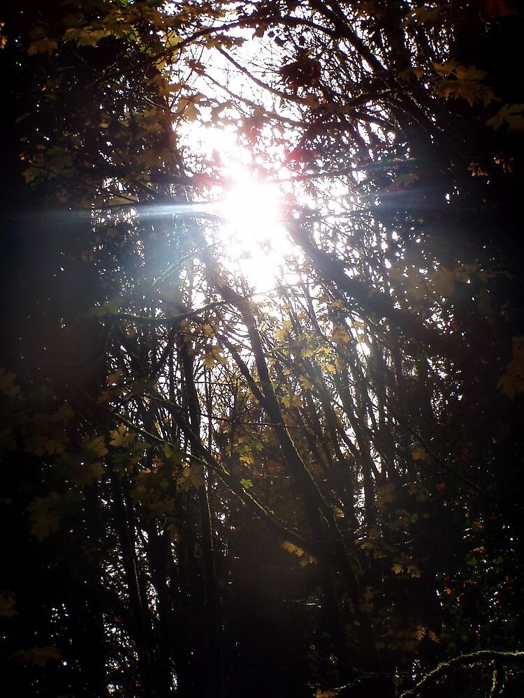 Autumn Sun Rays #42 by Dawna Morton