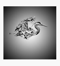 smokey heron Photographic Print