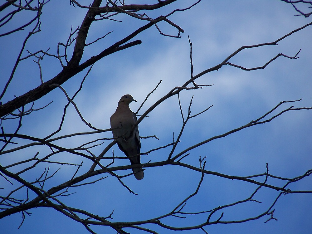 dove by justonegringo