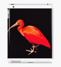 Scarlet ibis on black background iPad Case/Skin
