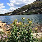 Colorado Mountain View by Jenna Jade