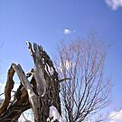 Broken Willow Tree by Shulie1