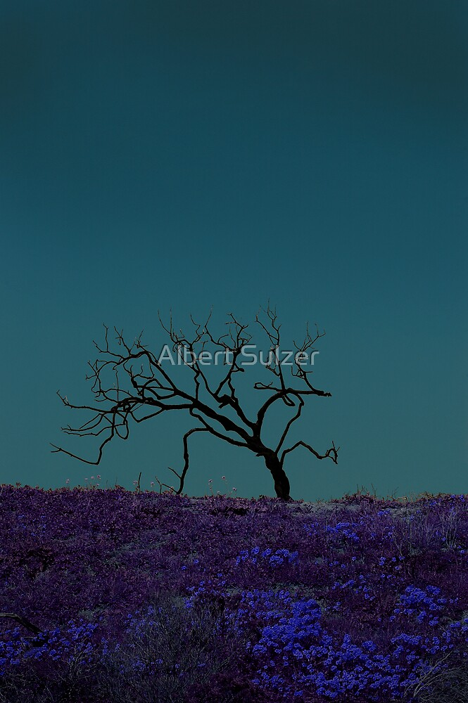 Dead Tree03 by Albert Sulzer