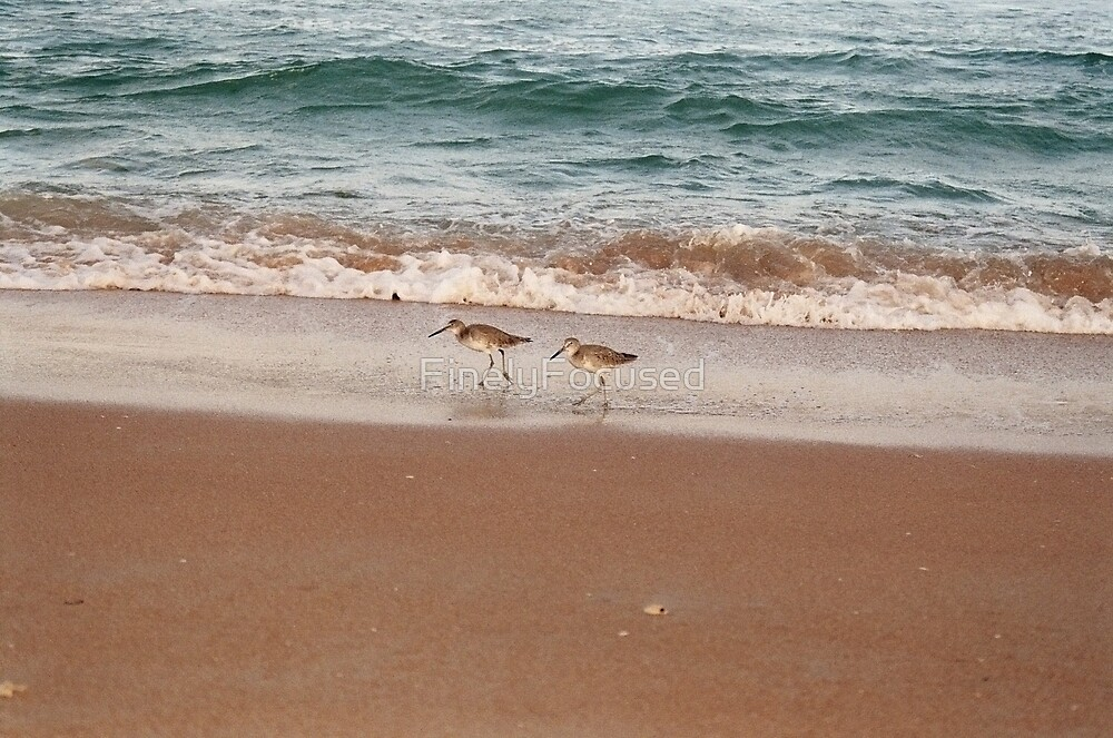 Sandpiper Couple by FinelyFocused