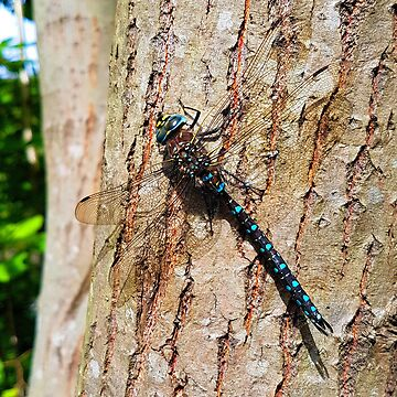 Dragonfly by loadinglevelone