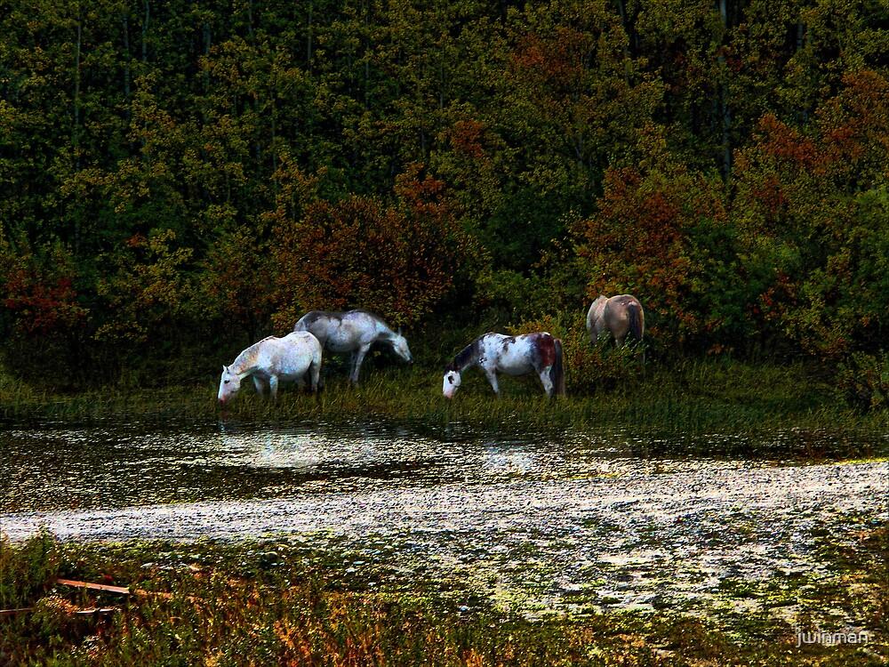 Wild horses by jwinman