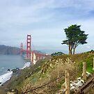 Golden Gate Bridge With Tree by Lynda Anne Williams
