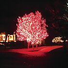 red blaze by greeneyedlady
