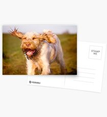 Orange and White Italian Spinone Dog in Action Postcards