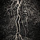 Fig Roots #1 by Mark Boyle