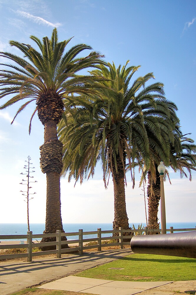 Palms by Jawaher
