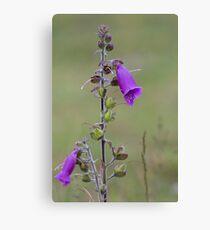 purple summer flower Canvas Print