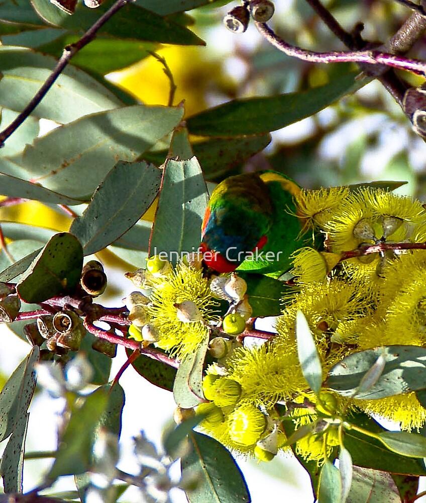 Lorikeet feeding in a gum tree by Jennifer Craker