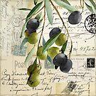 Olivia II Olive Branch Postcard by mindydidit