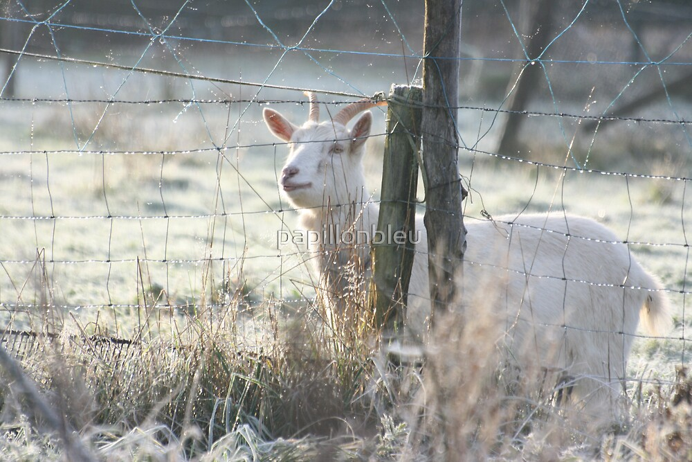 The Grass is Greener your side! by Pamela Jayne Smith