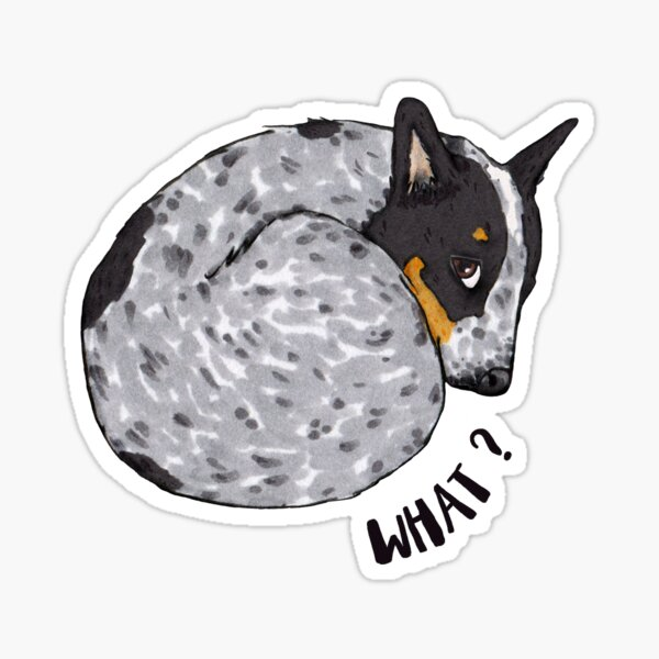 Blue Heeler Says, What?, by Artwork by AK Sticker