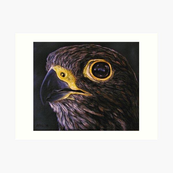 """Peregrine Falcon"" - Oil Painting Art Print"