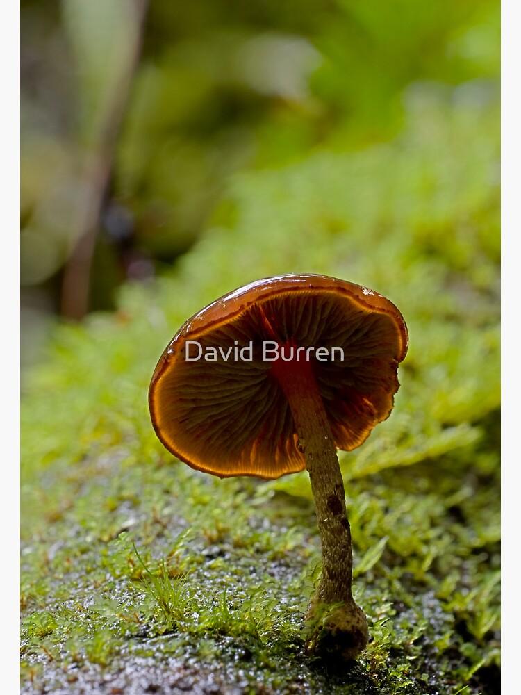 Forest Glowth by DavidBurren
