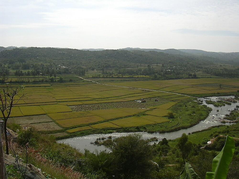 field by pugazhraj