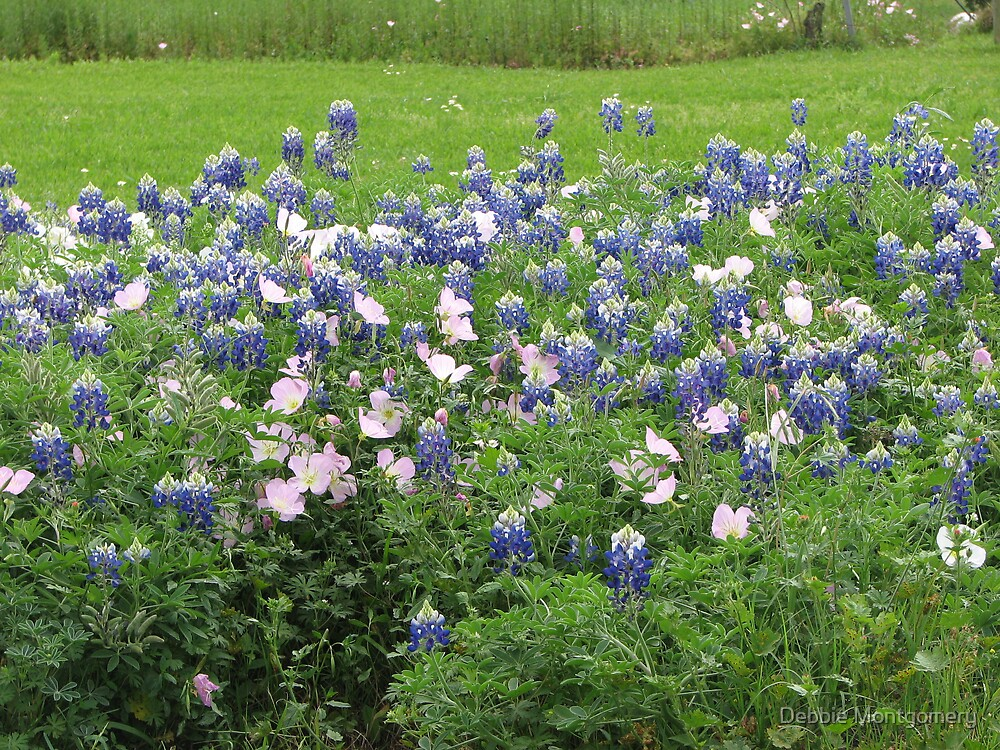 A Field of Bluebonnets with Buttercups by Debbie Montgomery