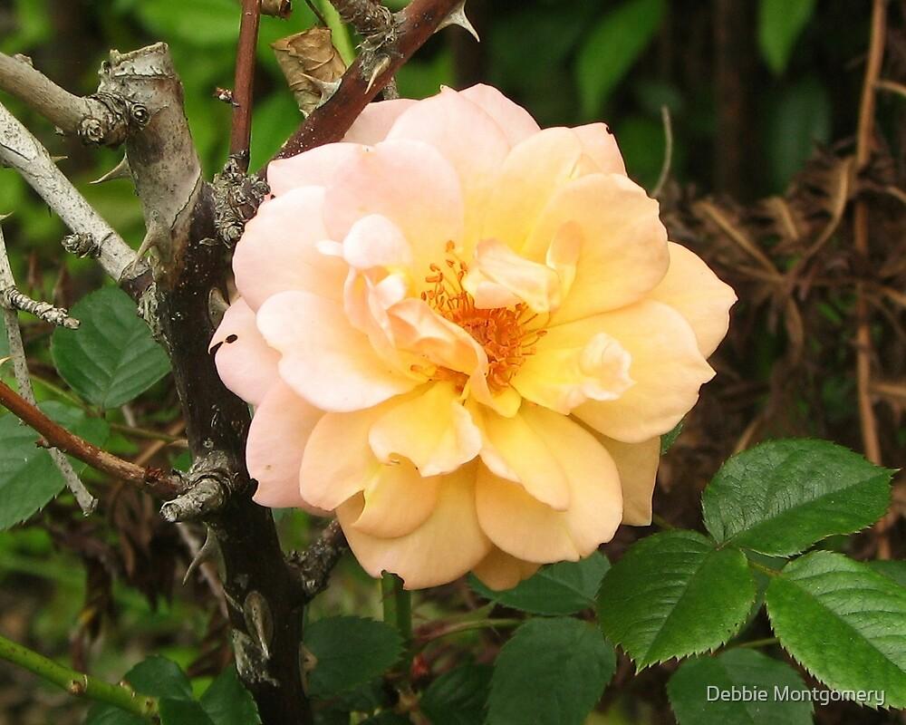 A Galveston Rose by Debbie Montgomery