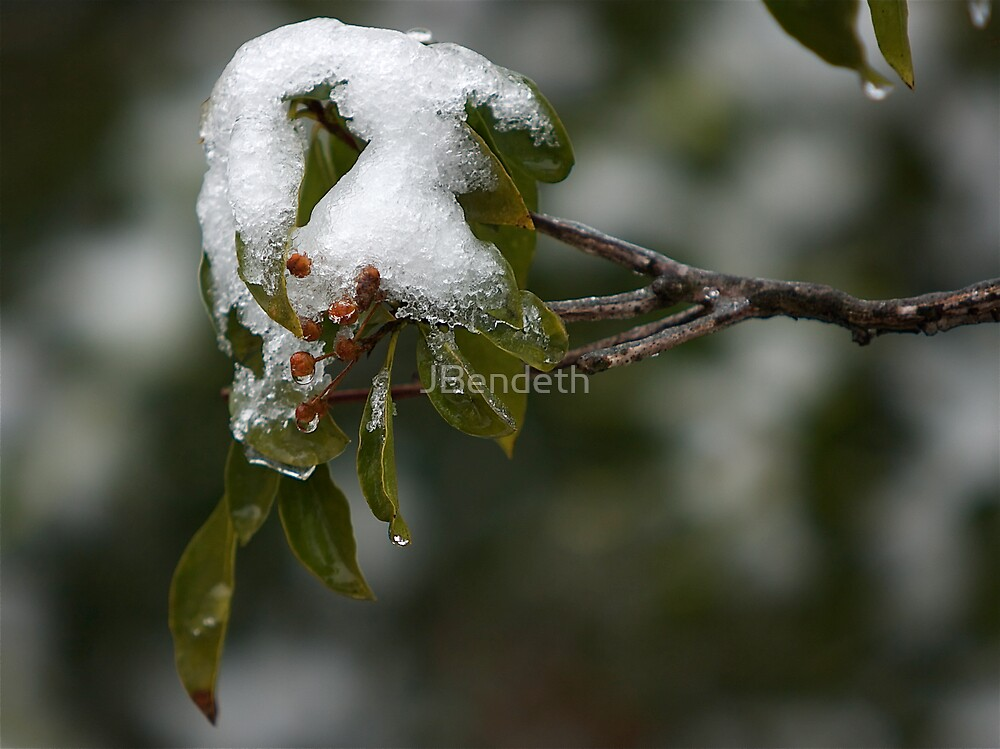 Cold........... by JBendeth