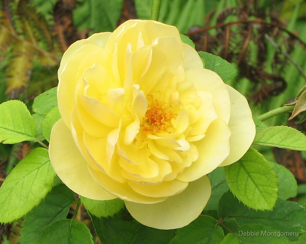 A Yellow Rose In Texas by Debbie Montgomery