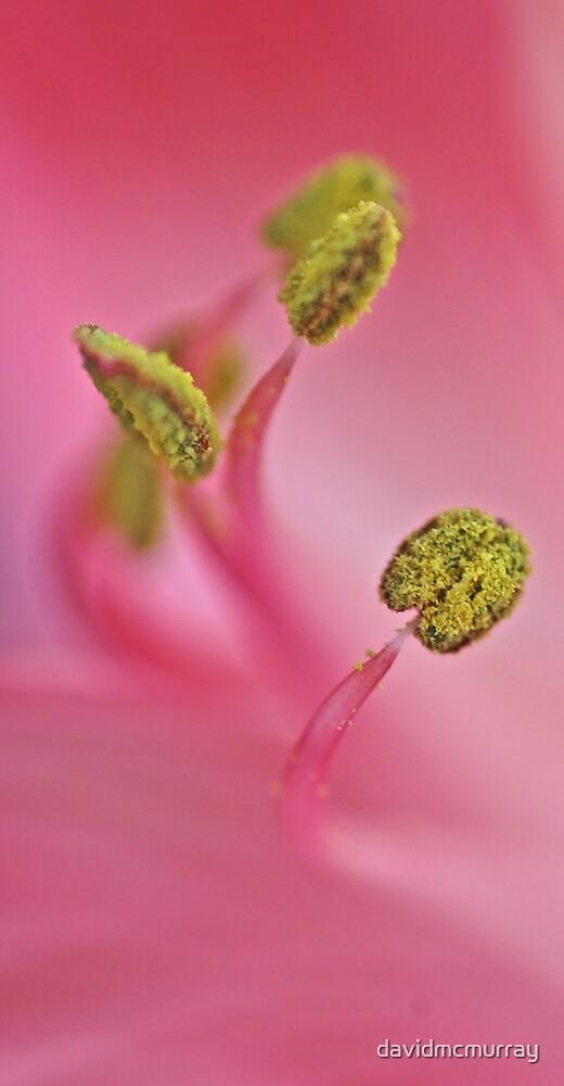 So Soft. So Pink. by davidmcmurray