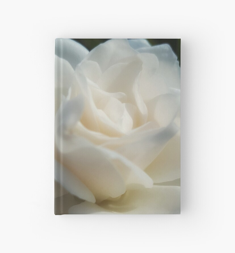 A White Rose by Leah Ripperger