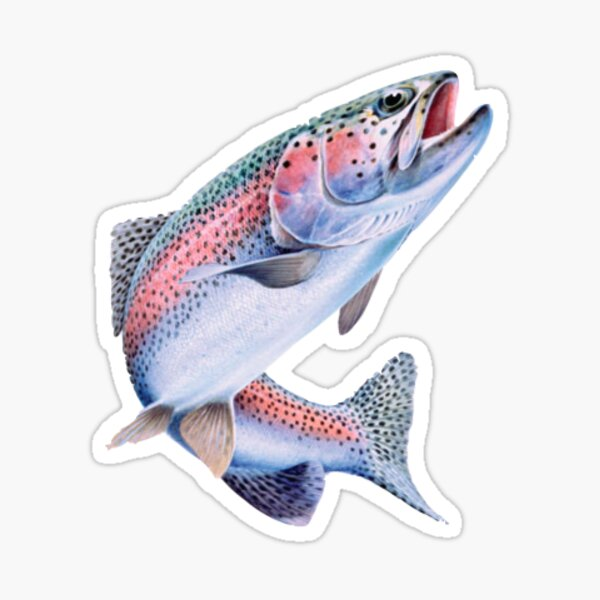 Rainbow Trout Fish Sticker