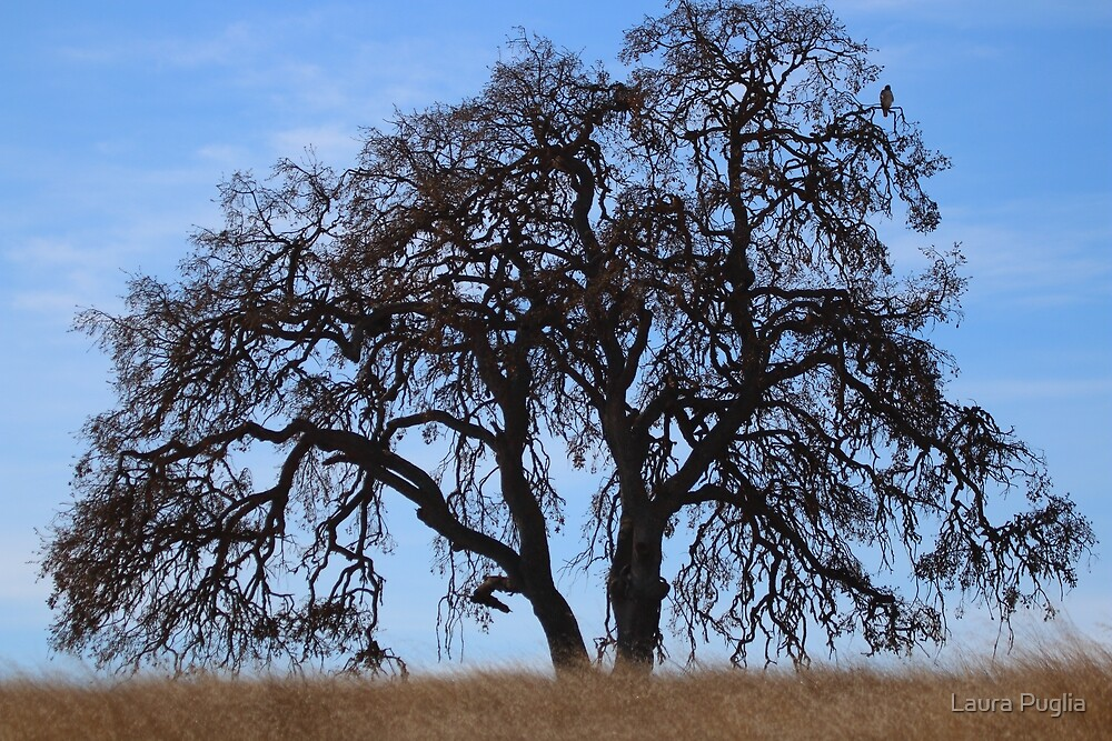 The Big Old Oak Tree (With Red Tailed Hawk) by Laura Puglia