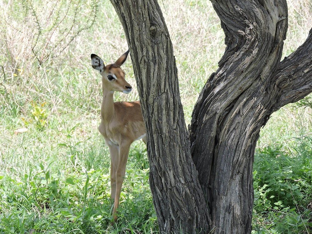 Curious Impala Calf by Hermien Pellissier