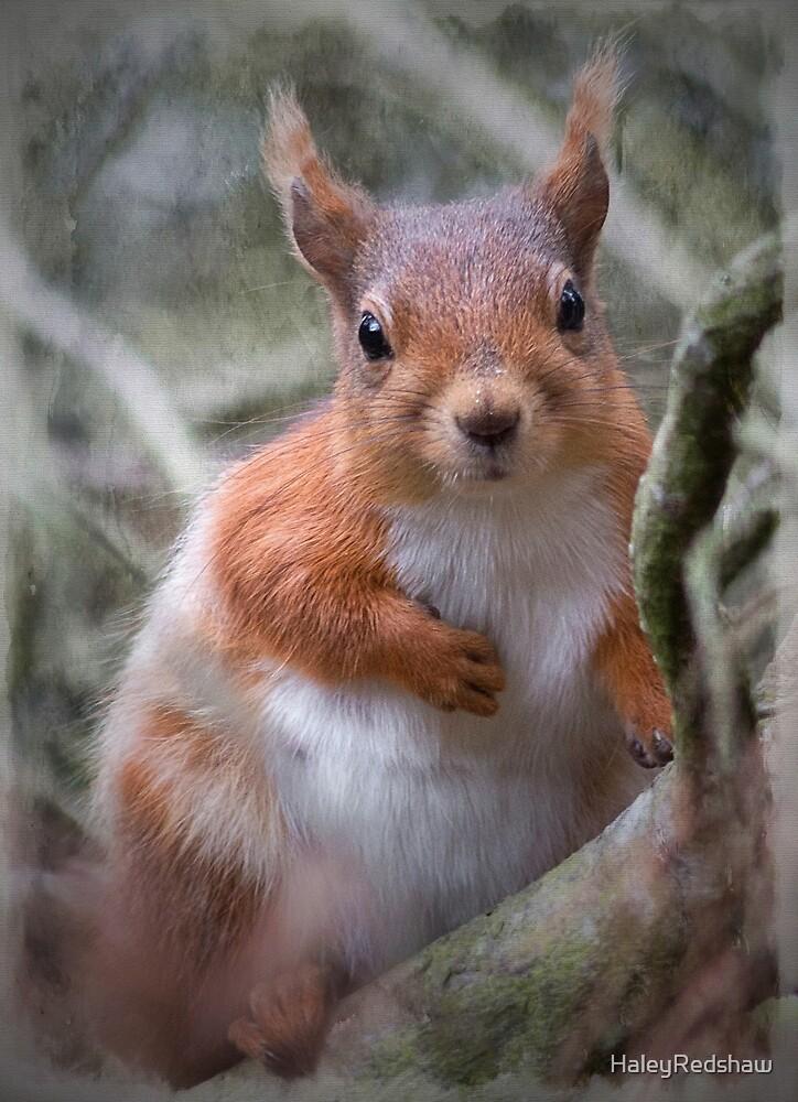 Cute red squirrel by HaleyRedshaw