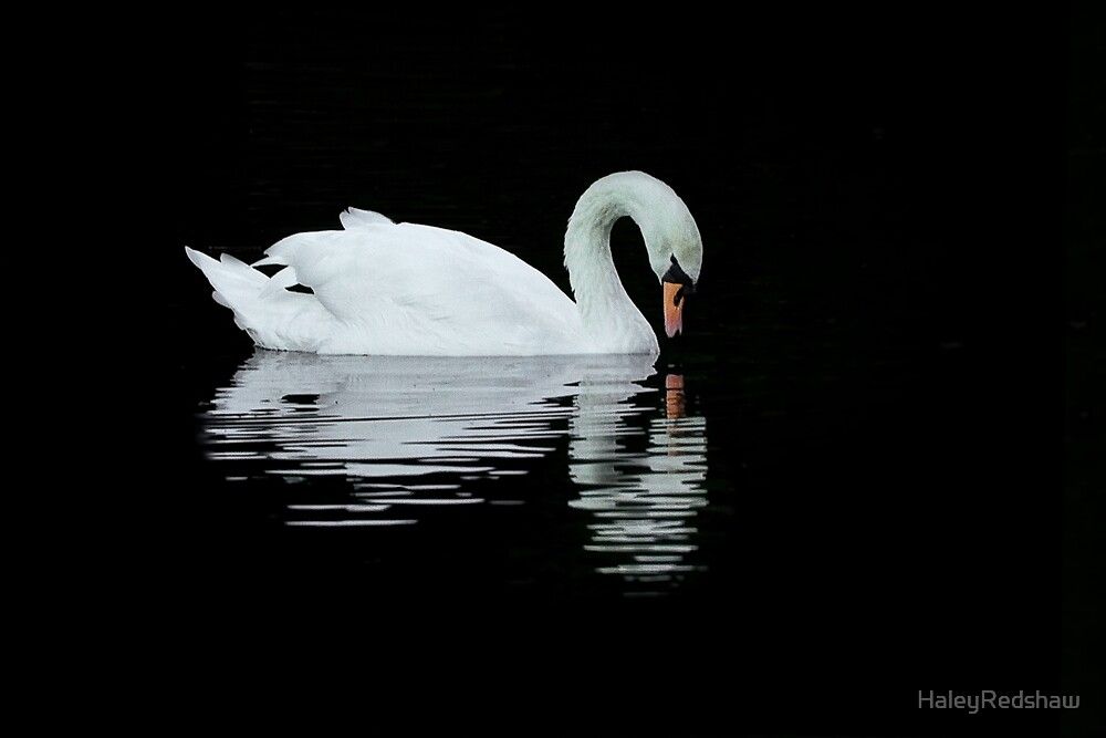 Lonely swan by HaleyRedshaw