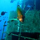 Guarding the Wreck by DiveDJ