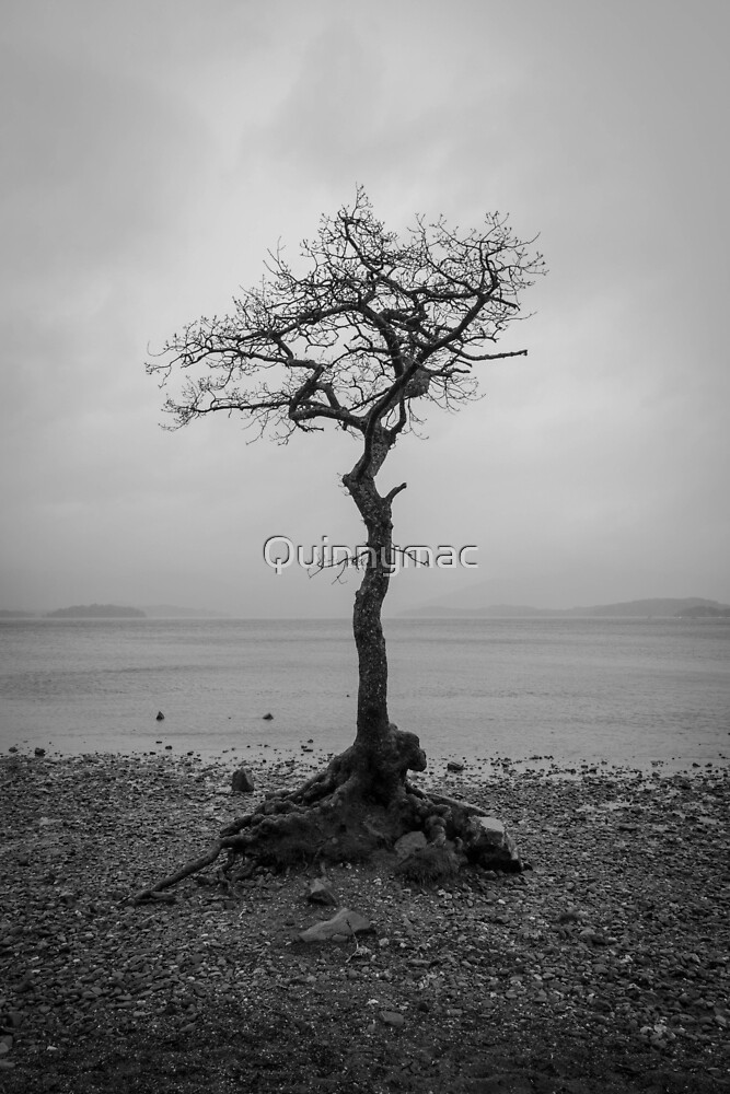 Lonely Tree by Quinnymac