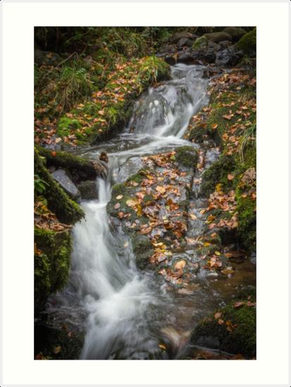Autumn walks by Quinnymac