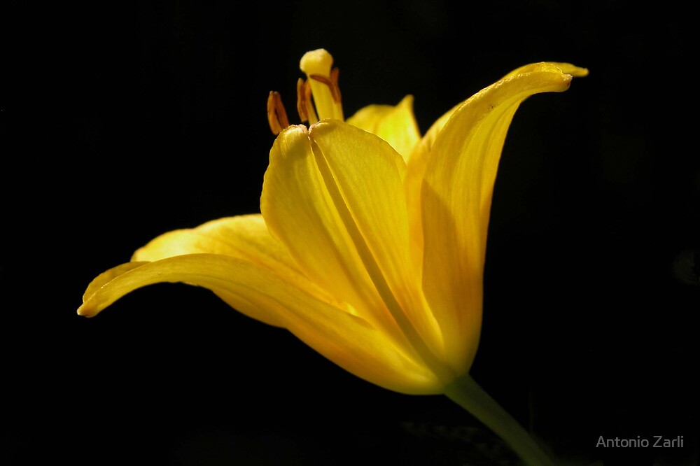 Yellow by Antonio Zarli